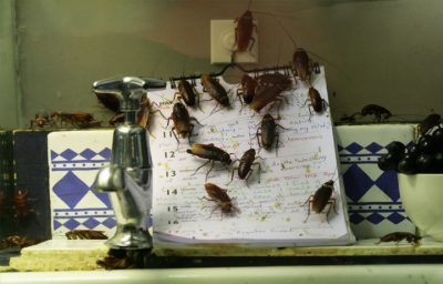 flying roaches