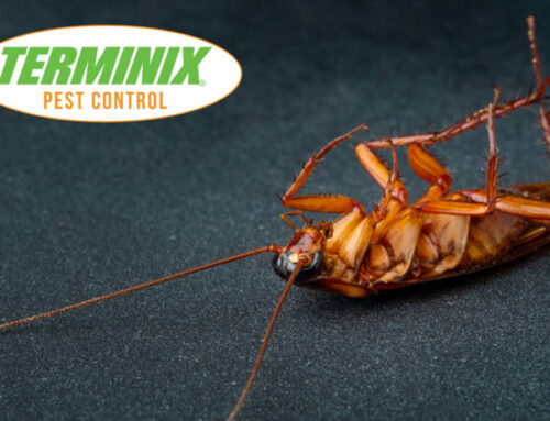 Why Do Cockroaches Die On Their Backs?