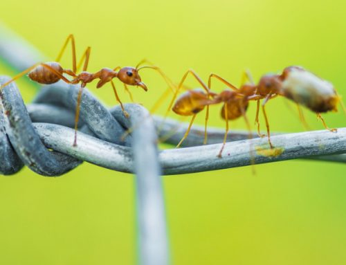 Why Do Ants Walk One By One?