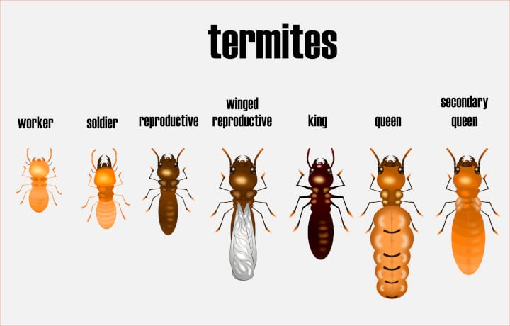 Is There A Termite King?