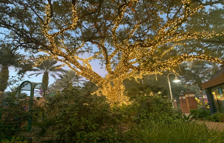 Audubon Zoo Lights