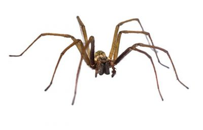 spiders & what Attracts Spiders