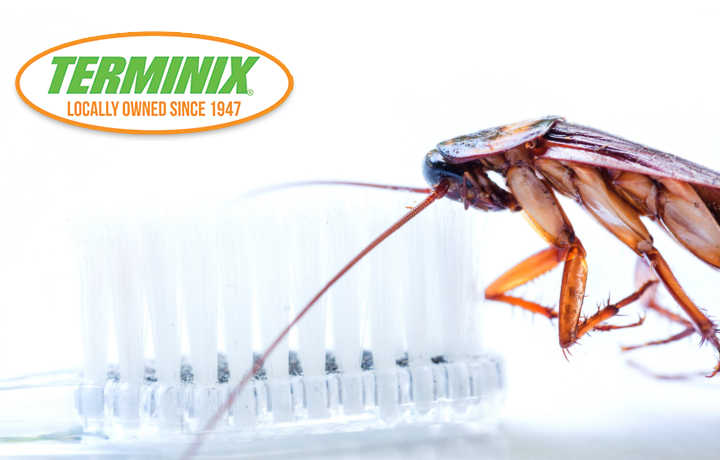 April Showers Brings…April Pests! | Terminix NOLA