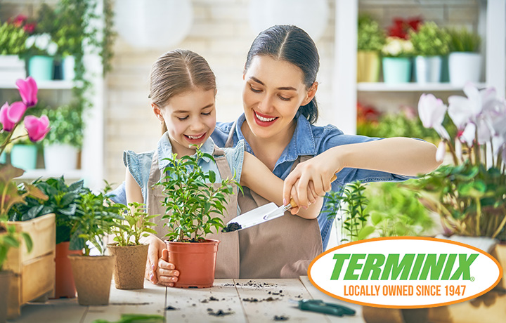 Landscaping Tips: Keep Termites Out
