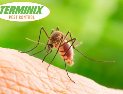 Protect Yourself Against Mosquitoes
