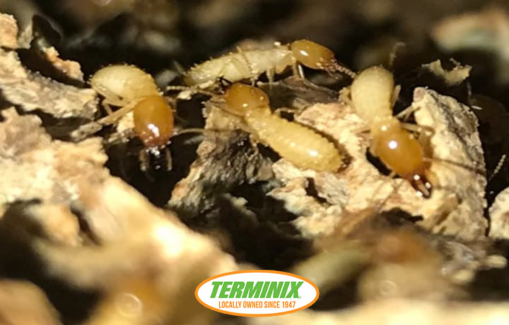 We are Hiring Termites
