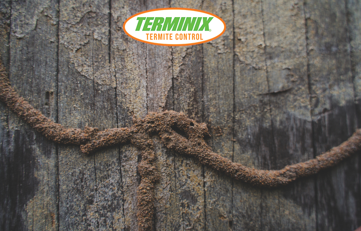 Termites Spread & Know if you have termties