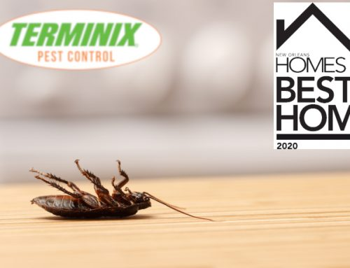 Best Pest Control Company