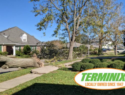 Protect Your Trees From Termites