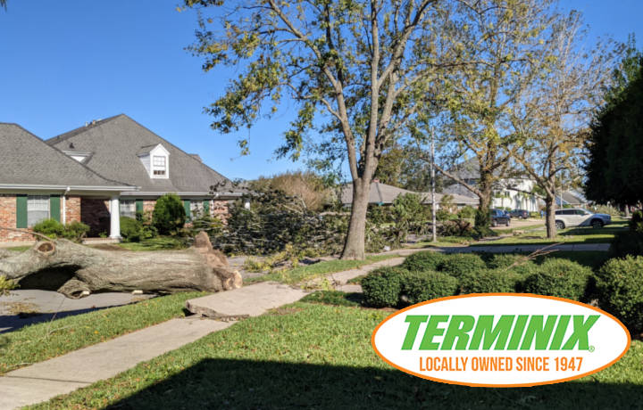 Termite Tree Protection -Terminix New Orleans