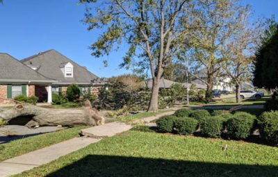 Termite Tree Protection by Terminix New Orleans