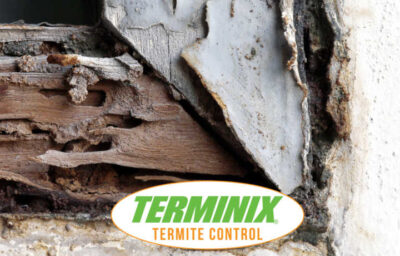 where do termites go during the winter