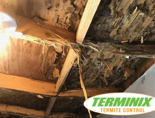 How To Know If You Have Termites?