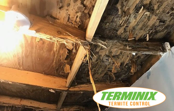How to know if you have termites