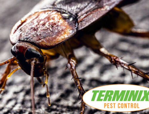 Why Is A Cockroach So Hard To Kill?