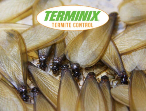 Leave The Lights On For Termites