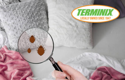 Don't. Ignore Bed Bugs (Bed with Bed Bugs)