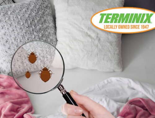 Don't Ignore Bed Bugs