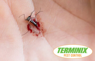 Mosquitoes Active - Dead Mosquito on Hand - Terminix