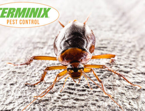 Why Cockroaches Are So Terrifying?